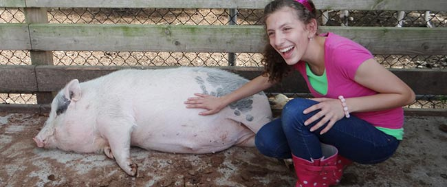 Can You Have A Pet Pig On Long Island