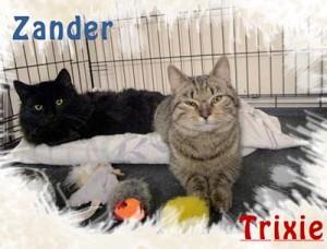 zandler-trixie