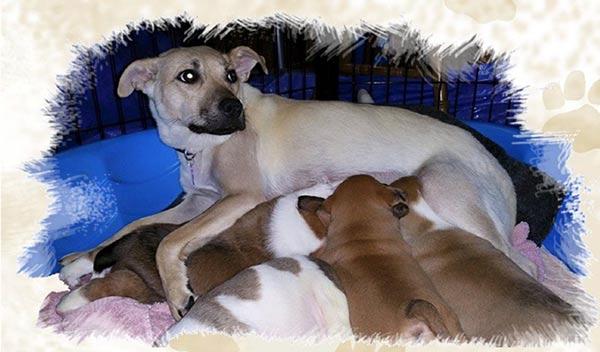 Pet Peeves, Inc    Pet Rescue Long Island   Pet Peeves